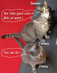 3 office cats  / 会社でお世話している3猫です。