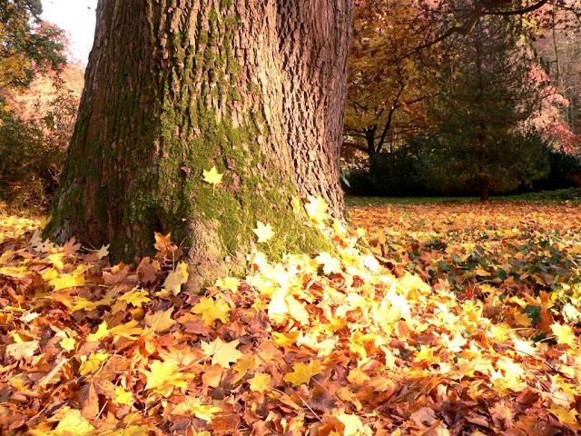Rombergpark Dortmund Herbst Laub Sonne Nachdenklich Depression