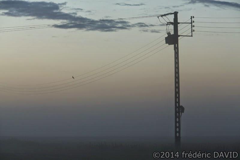 silhouette ligne électrique matin Seine-et-Marne