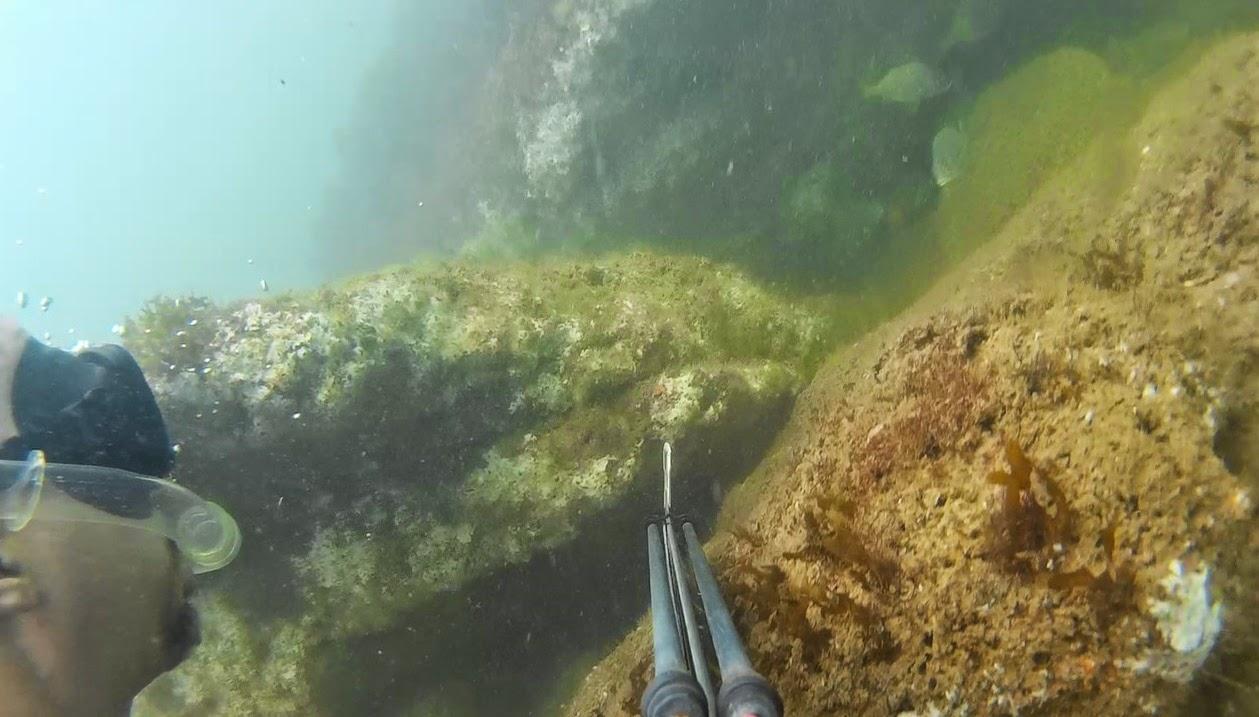 Pesca Sub y Apnea Perú