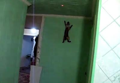 壁を登るネコ