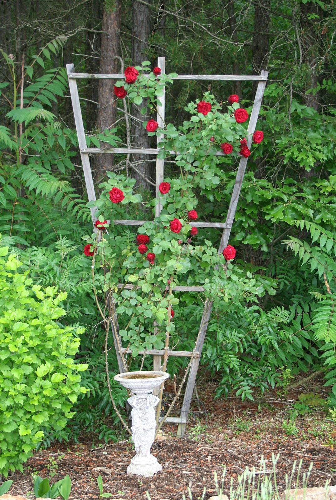 Rose trellis plans wooden rose trellis plans woodworking for Cj garden designs