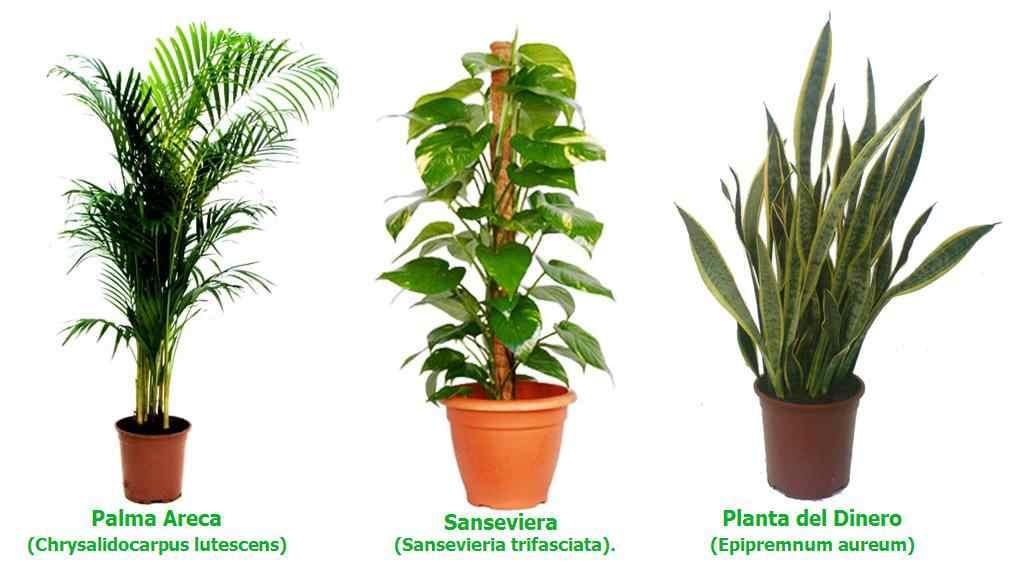 Mi Herbario Tipos De Plantas