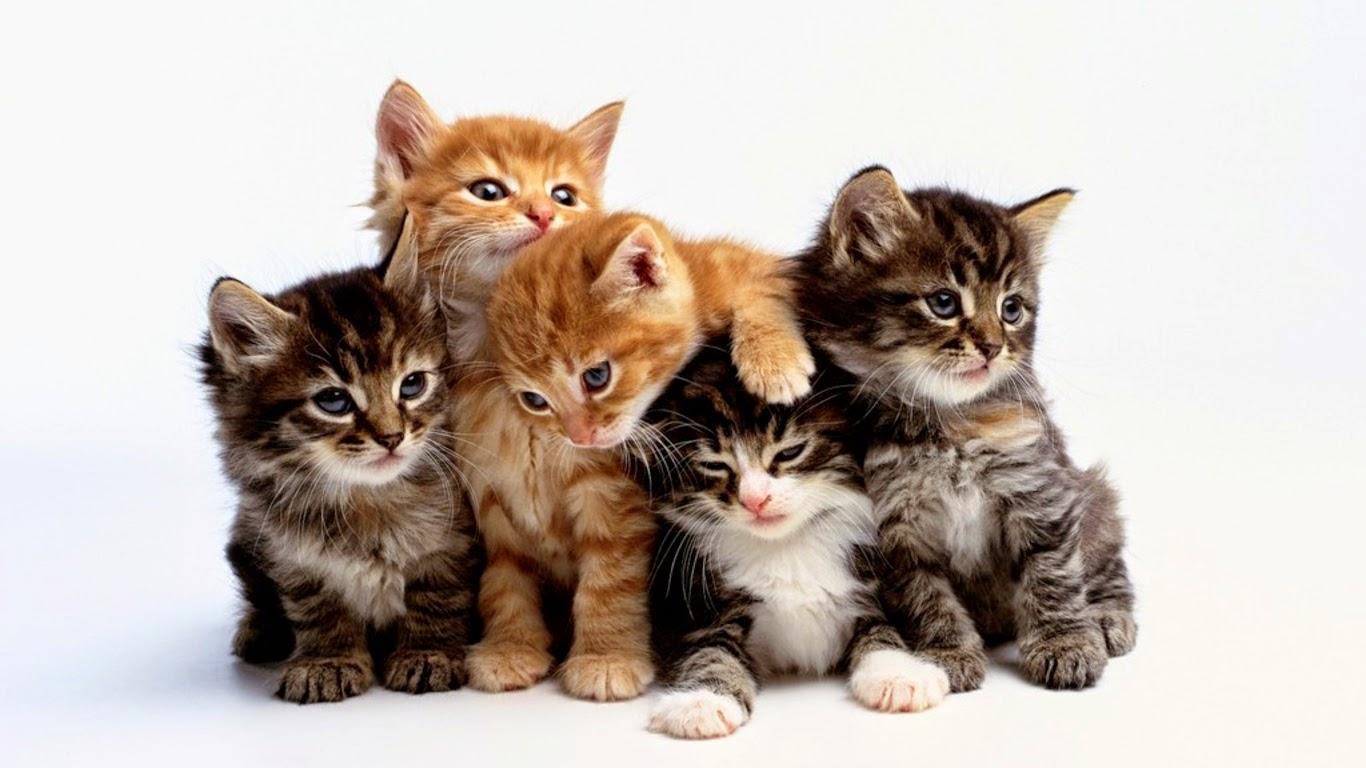 غرائب لا نعرفها عن القطط
