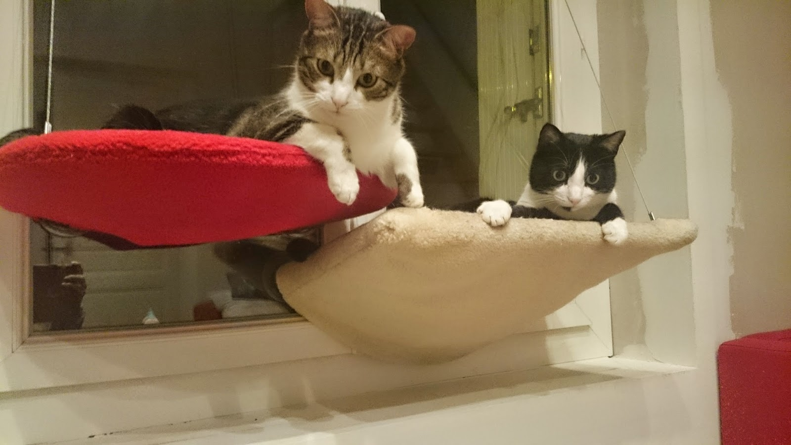 tout pour mon chat les nouveaux hamacs selmak de madeforcat. Black Bedroom Furniture Sets. Home Design Ideas