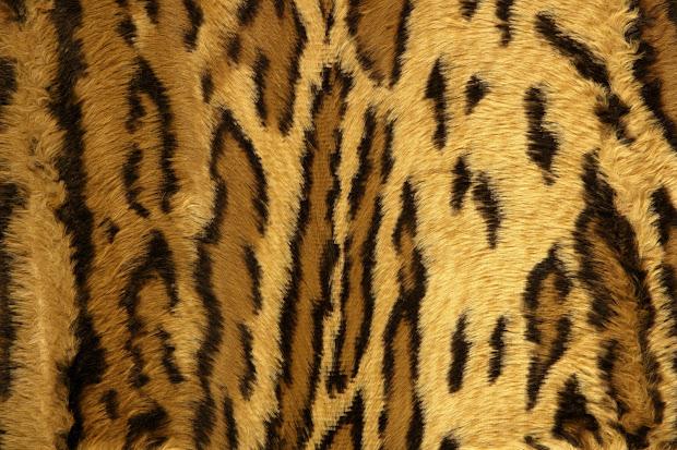 Leopard Cheetah Animal Print