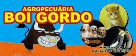 AGROPECUÁRIA BOI GORDO