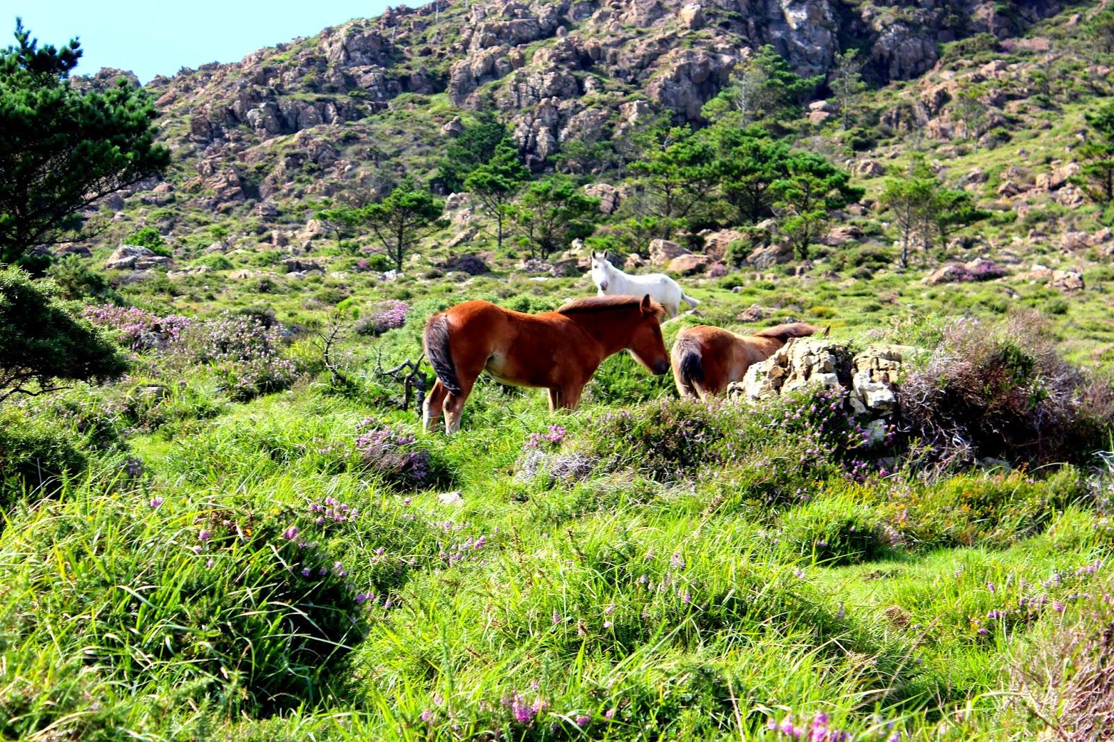 Naturaleza salvaje en la Sierra de la Capelada
