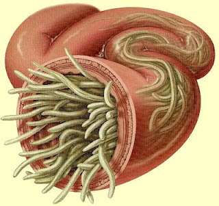 Sintomas de vermes cerebrais