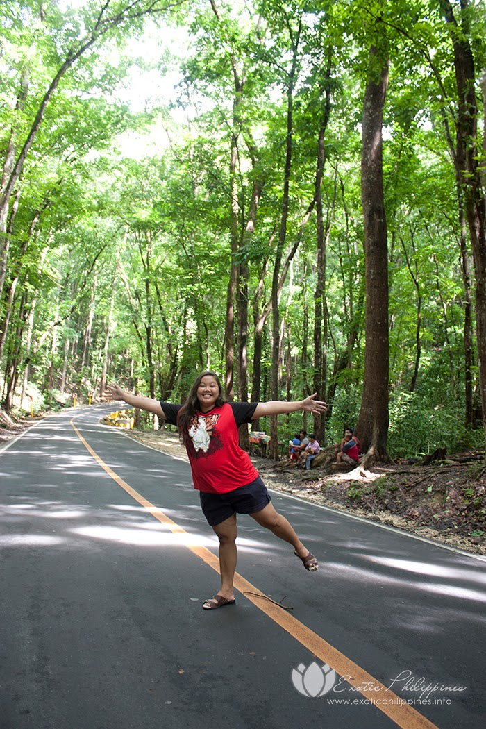 Bohol Man-Made Forest Exotic Philippines