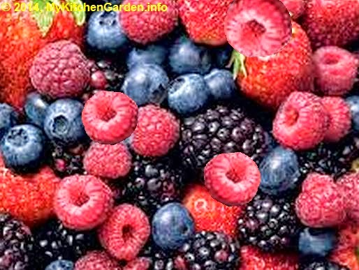 Mixed berries - blackberries, blueberries, cranberries, raspberries, strawberries