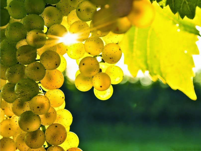 autumn-grapes-hd-image