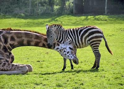 أحمل صور الحيوانات في العالم-منتهى
