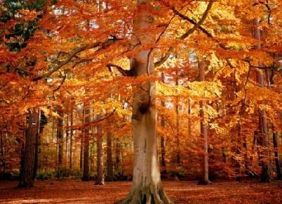 La naturaleza for Como se llaman los arboles que no pierden sus hojas