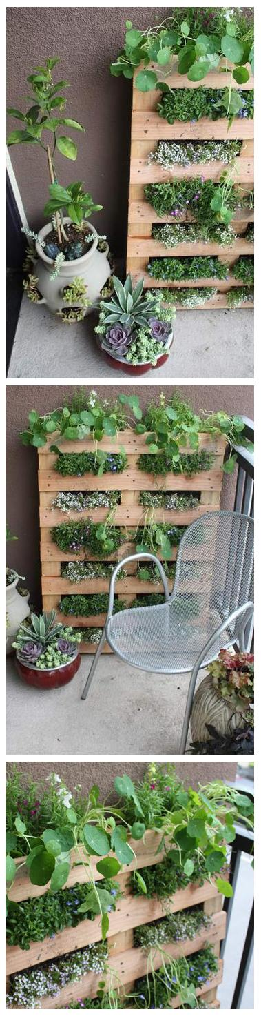 DIY : small space pallet garden