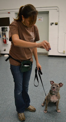 House Training Adult Dogs