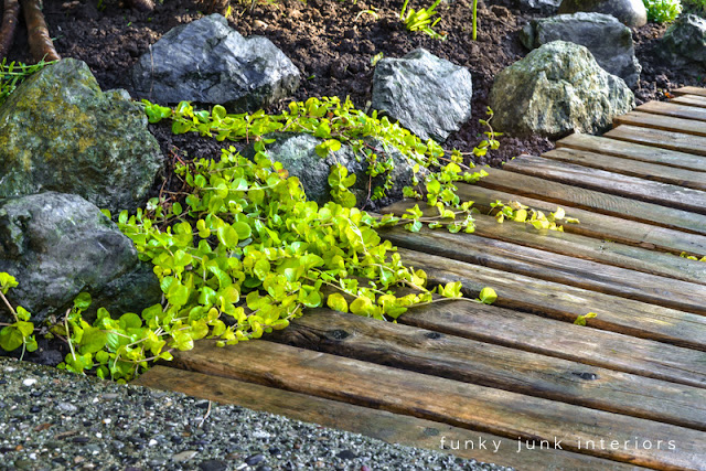 plants growing on pallet wood walkway