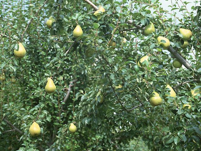 مزرعة للبيع بالاسماعيلية, اراضى للبيع بالاسماعيلية, مزارع للبيع فى الاسماعيلية, مزارع الاسماعيلية