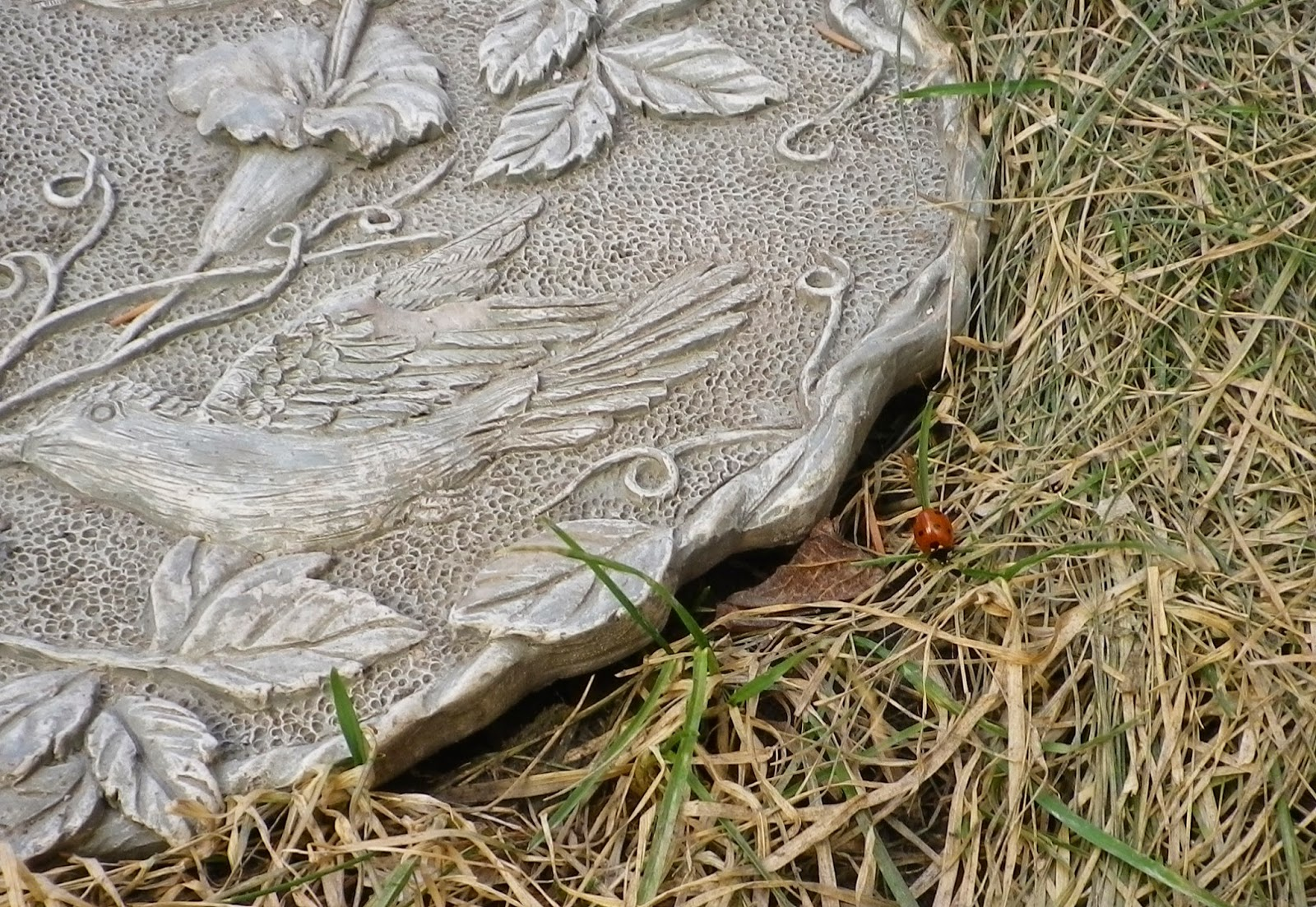 Backyard Ladybug - by feather