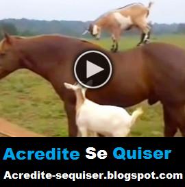 Vejam Só O Que Essas Cabras Aprontaram Com Os Cavalos. Isso é Muito Abuso Da Parte Delas =)
