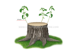 Part of Tree (Stump)