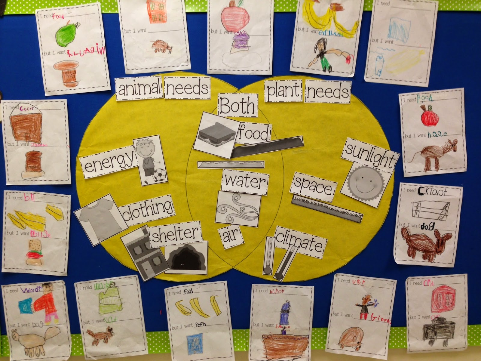 Basic Needs Of Animals Worksheets : Basic needs chalk talk a kindergarten lovin