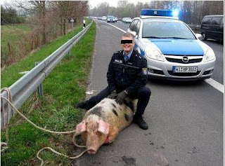 Funniest pictures of police: German policeman catches pig