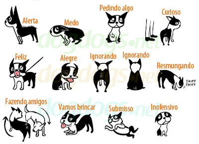 dog language