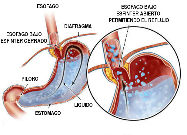la digestion: digestión estomacal
