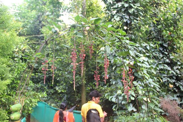 Spice Garden, Munnar