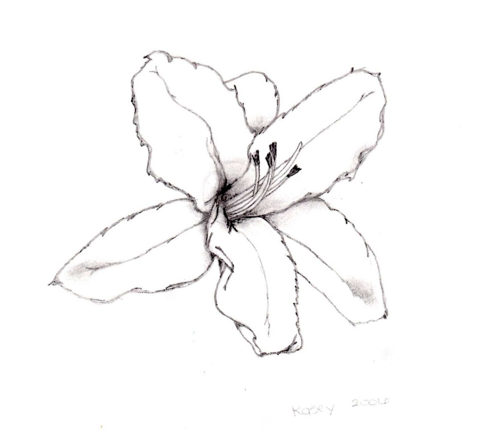 1000 images about Drawing Flowers on Pinterest