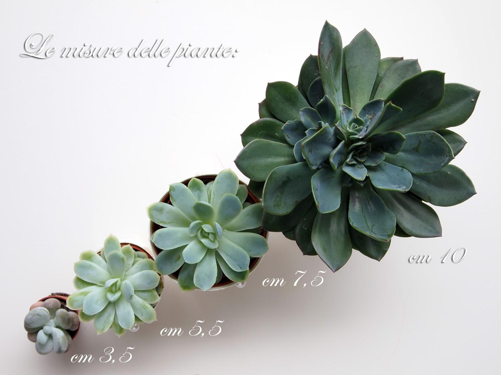 Bomboniere piante grasse prezzi idee per interni e mobili for Vendita piante grasse on line