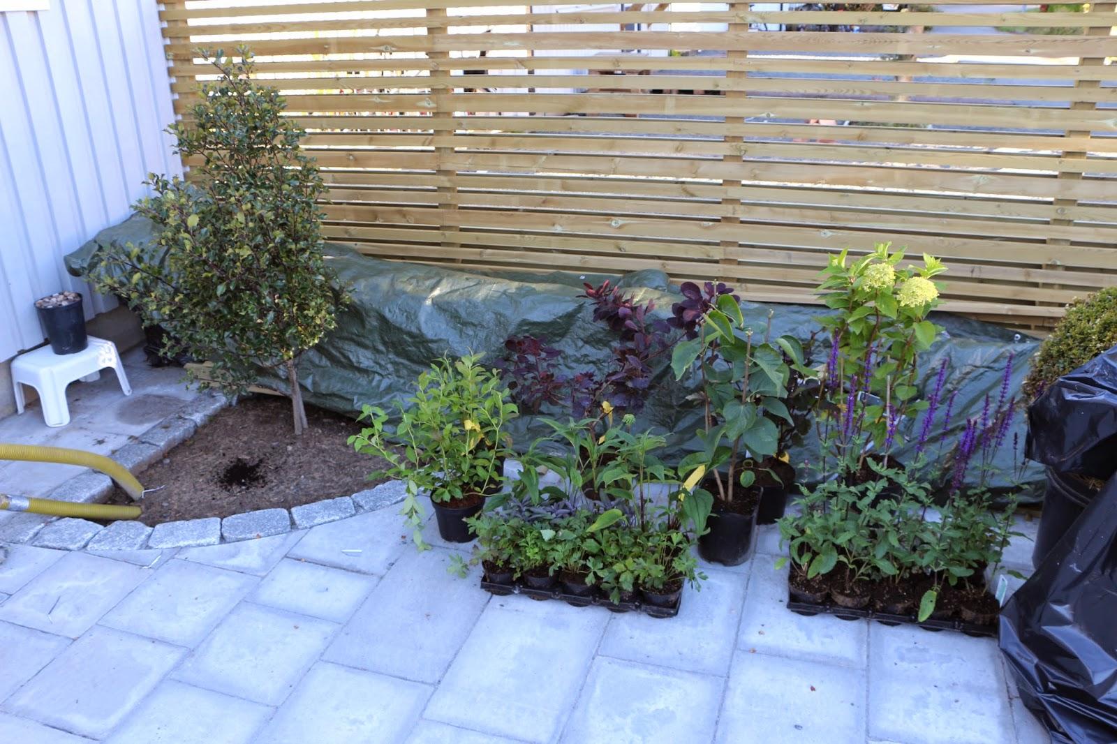 387 kvadrat : en trädgård i förvandling