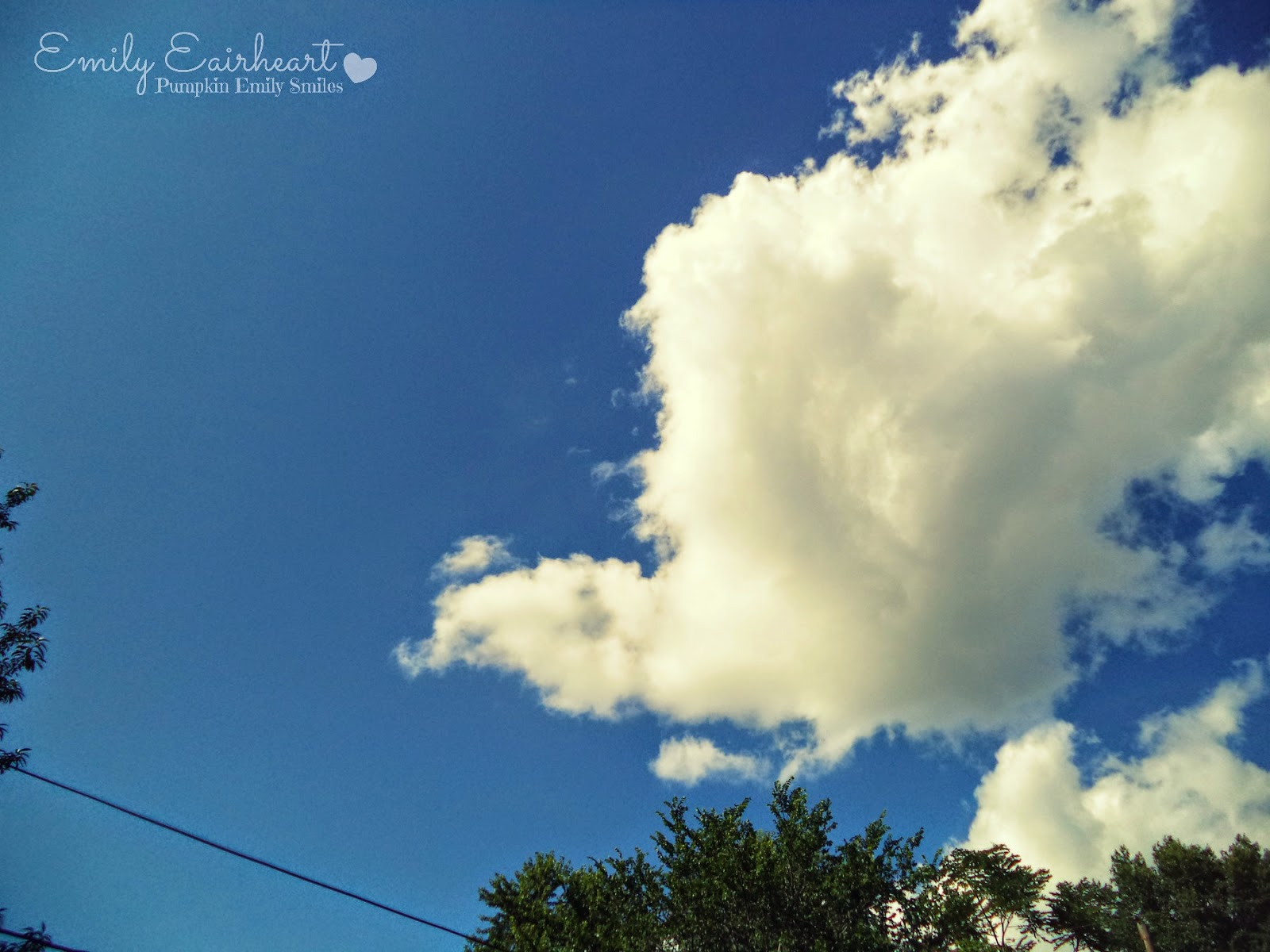 Clouds that look like a turkey,swan, and a baby elephant.