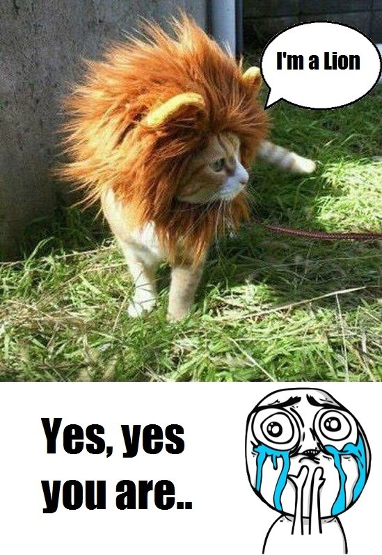 I'm A Lion - Yes Yes You Are