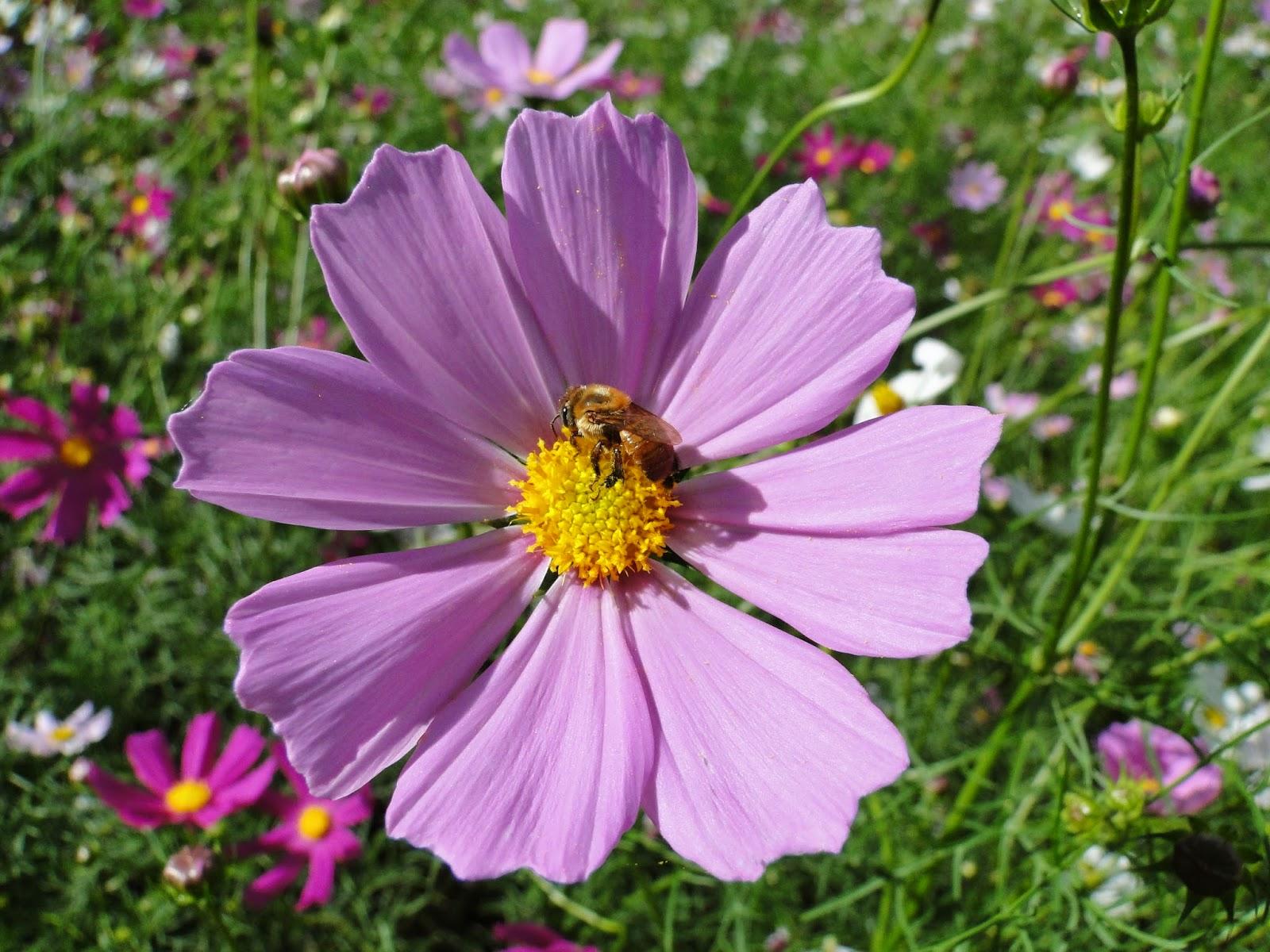 Além da beleza das cores, também ´interessante ecologicamente