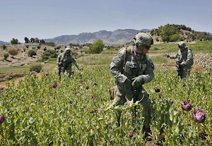 http://4.bp.blogspot.com/-ZxvVNIoo8s4/Un3EP3QeY0I/AAAAAAAAGBs/wo1QGHckVlE/s300/afghanistan-opium-fields.png