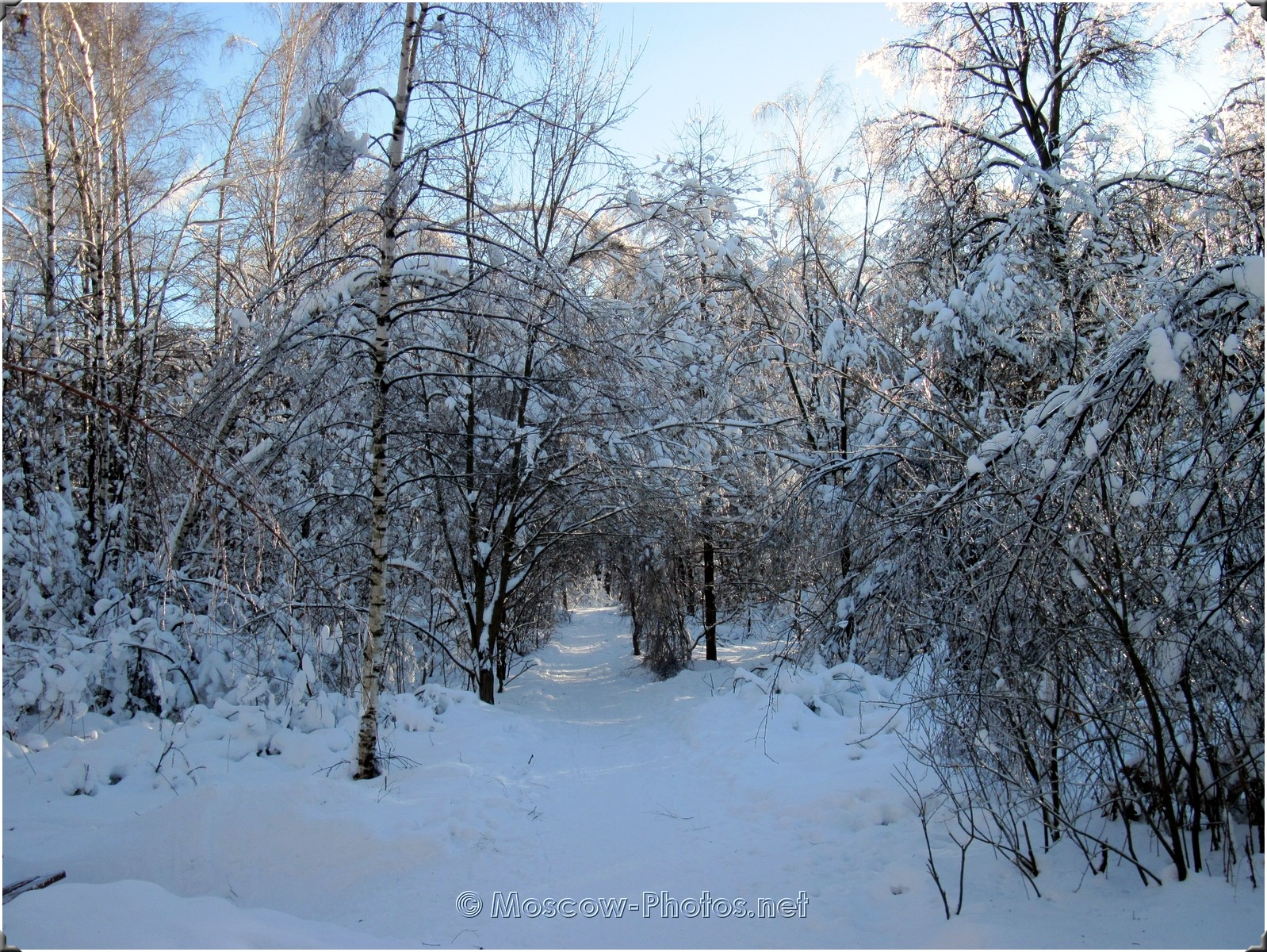 Moscow Winter Forest