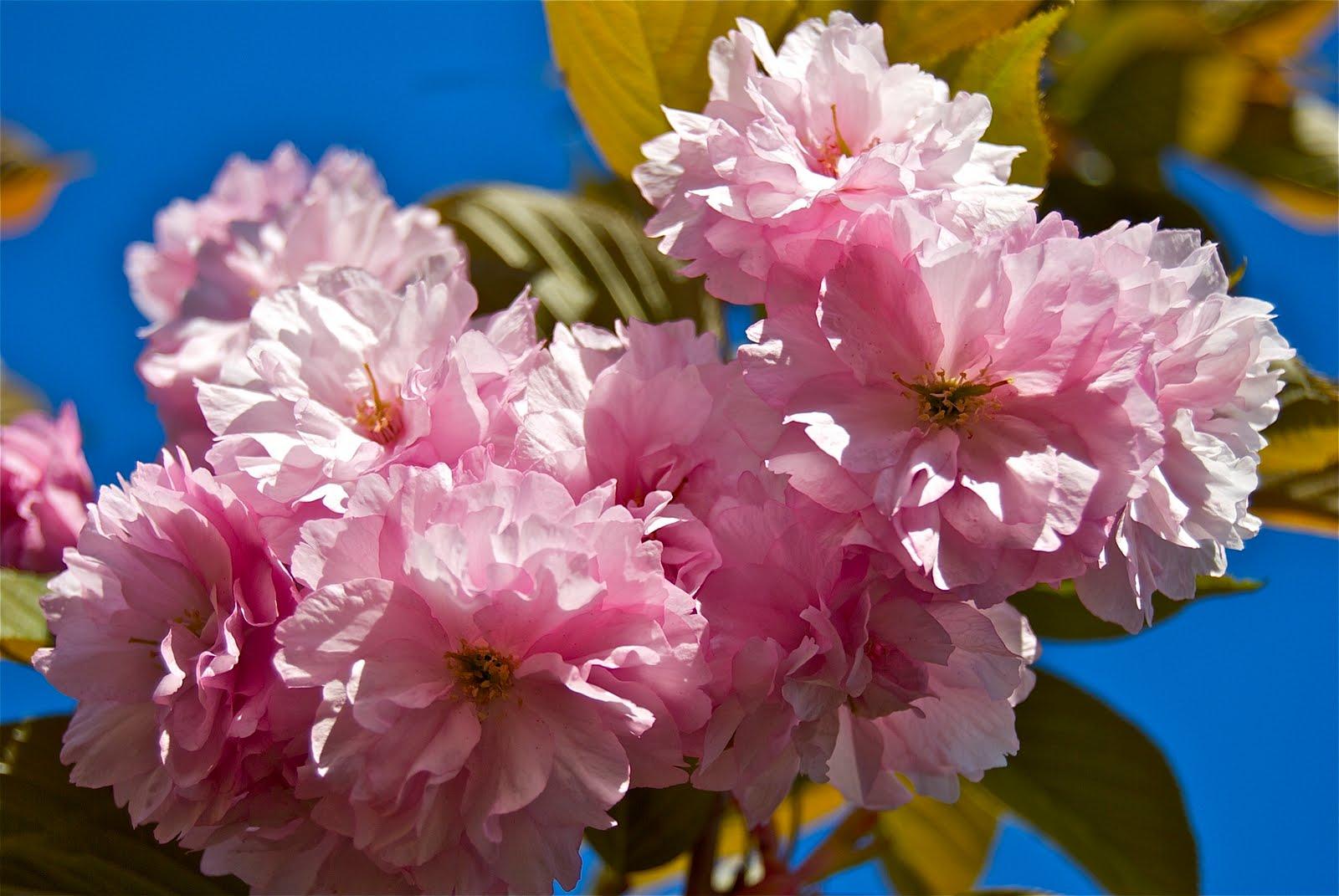 Foto zanleone roberto fiori di primavera 5 foto for Fiori di primavera