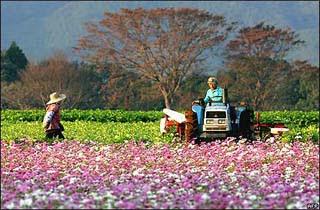Mengintip Usaha Jepang Mengatasi Masalah Pertanian