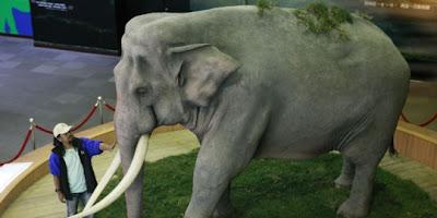 Foto seekor gajah bernama Lin Wang