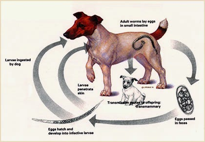 Foods That Kill Worms In Dogs