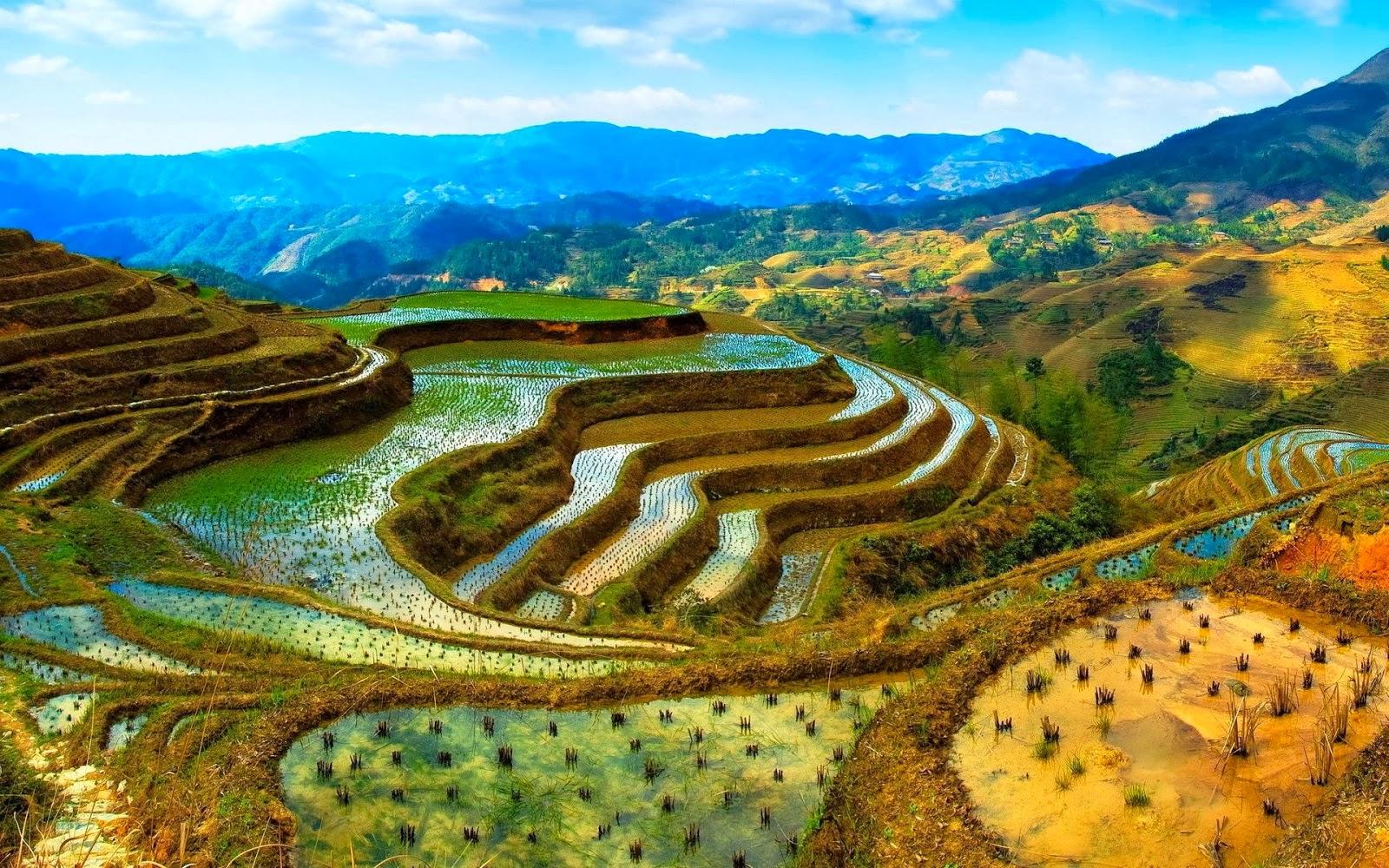 Rice terraces in Longshchen