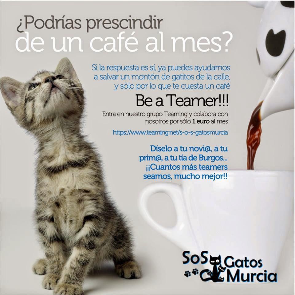 Ayuda para SOS Gatos Murcia