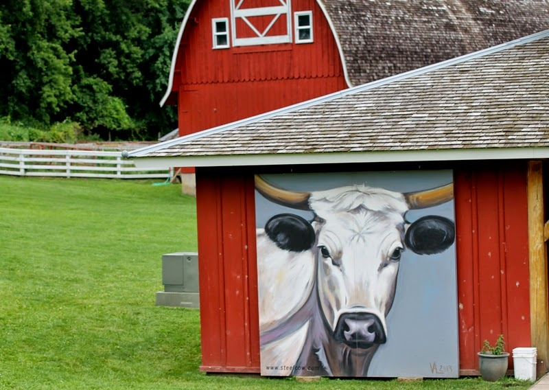 Steel Cow paintings available in the gift shop at Seed Savers Exchange, Decorah, Iowa