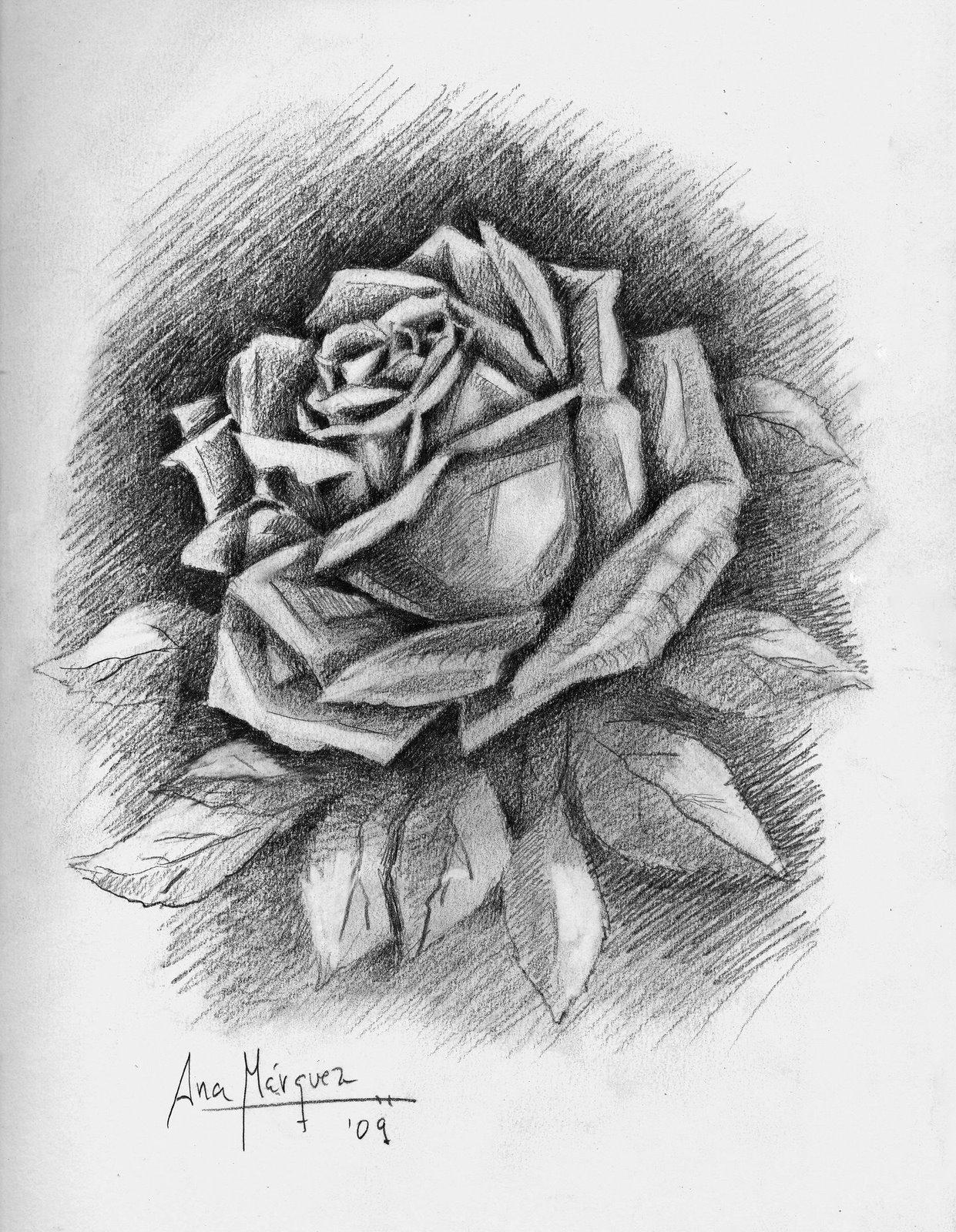 Dibujos de Rosas a Lapiz  Vida Blogger