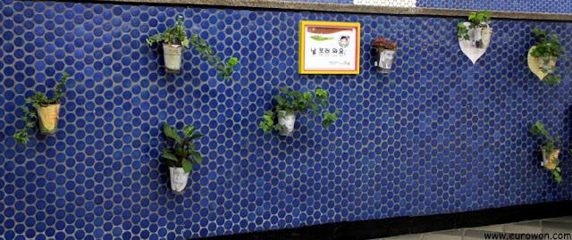 Plantitas en la pared de la estación de Yeongdungpo