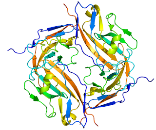 Computer generated image of the CD47 molecule