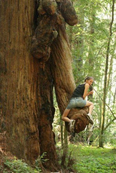Mulher em cima de tronco de árvore estranho
