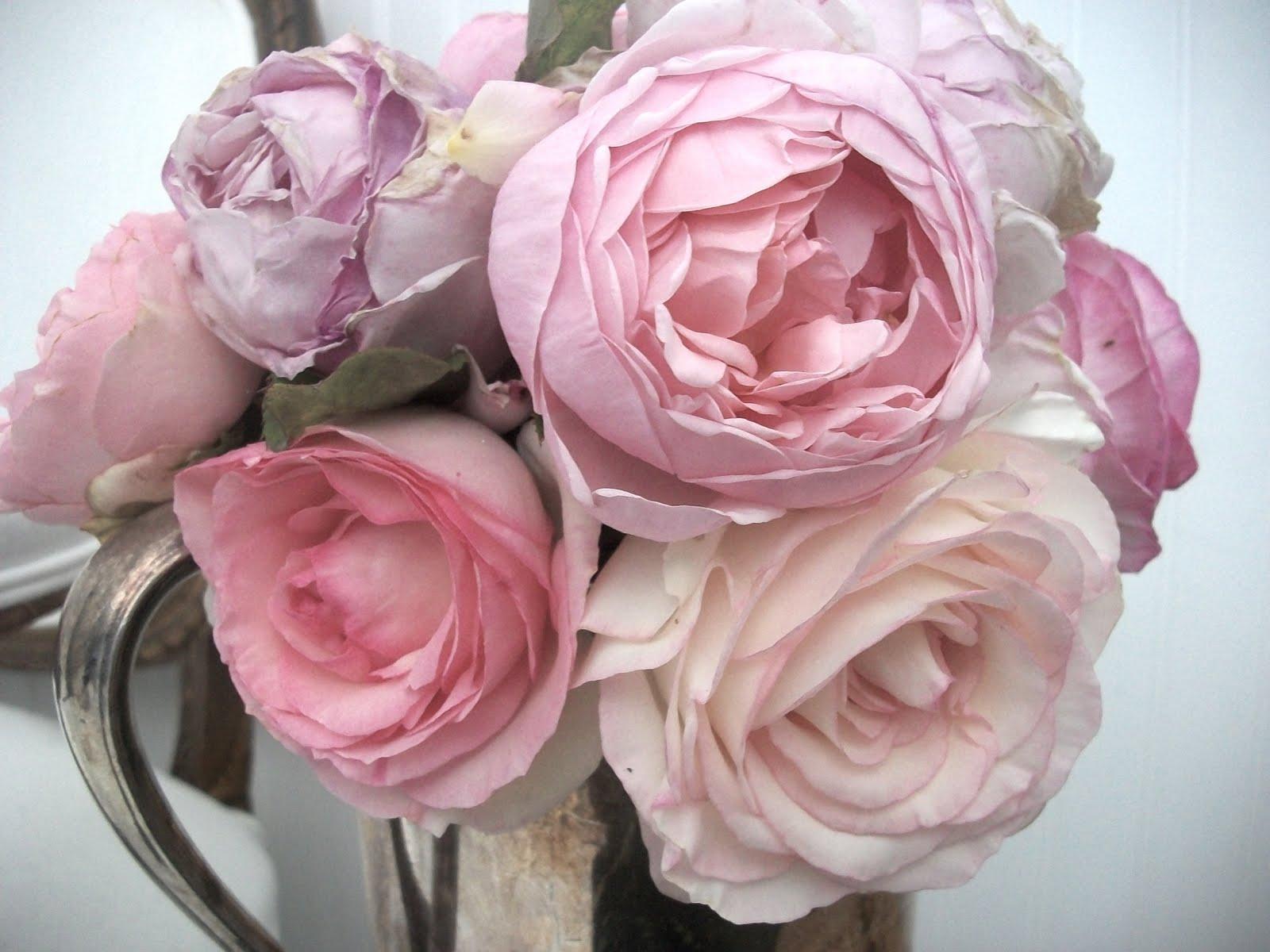 full bloom cottage roses roses everywhere. Black Bedroom Furniture Sets. Home Design Ideas